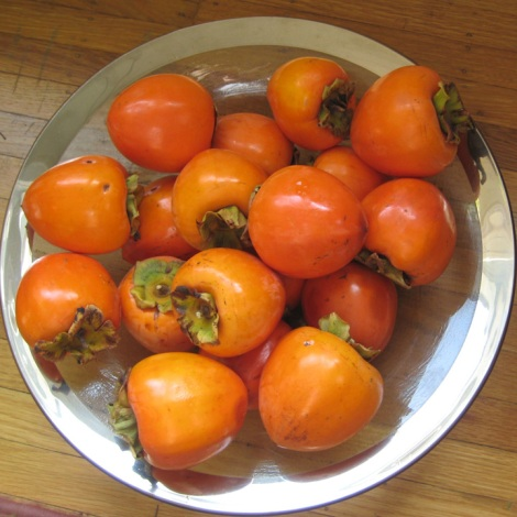 hachiya-persimmons-in-a-bowl